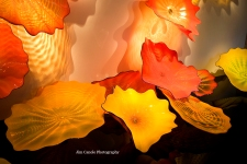 Jim Canole-Chihuly In Boston 10